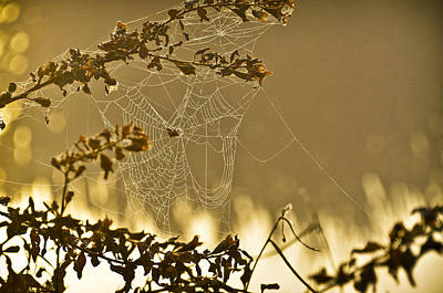 Web Of Life Photograph - Nature Loom by Carolyn Marshall