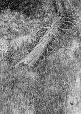 Charcoal Landscape Drawings Drawing - Nature Study No 2 by David King