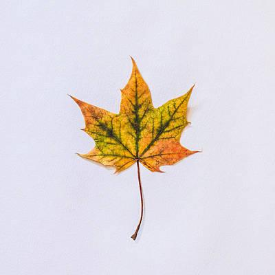 Fall Colour Photograph - Natures Art by Kate Morton