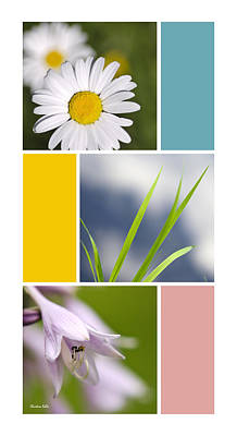 Rollo Digital Art - Nature's Beauty Colorful Flowers Collage by Christina Rollo