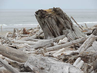 Agate Beach Oregon Photograph - Natures Landscape by Traci Hallstrom