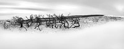 Wa Photograph - Nature's Remnants by Az Jackson