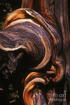 Burl Photograph - Natures Sculpture by Paul W Faust -  Impressions of Light