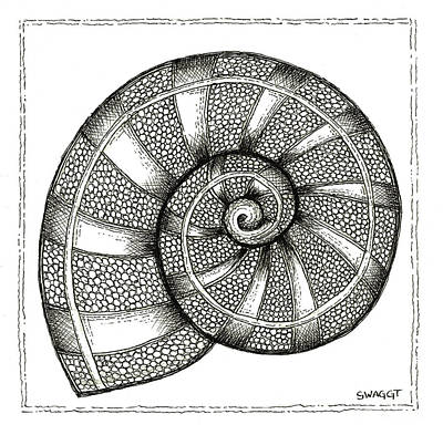 Pen Drawing - Nautilus by Stephanie Troxell