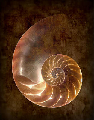 Spiral Photograph - Nautilus by Tom Mc Nemar
