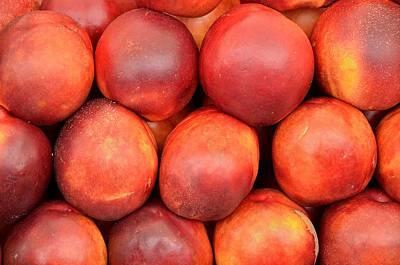 Nectarine -  Prunus Persica Print by Giuseppe Elio Cammarata