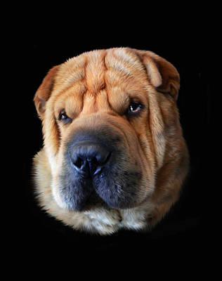 Dog Digital Art - Nelson by Julie L Hoddinott