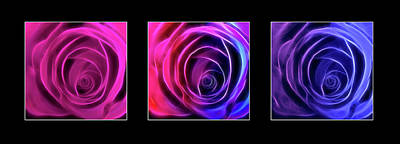 Neon Roses Triptych On Black Print by Lesley Smitheringale
