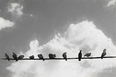 Electricity Drawing - Network Of The Bird Line  by Jorgo Photography - Wall Art Gallery