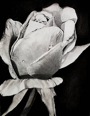 Floral Drawing - New Beginning  by Andrea Realpe