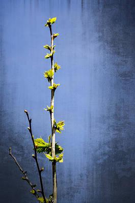 Photograph - New Beginnings by Carolyn Marshall