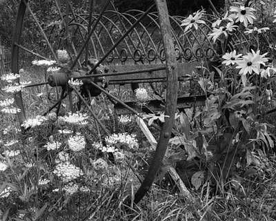 New England Summer Wild Flowers Bw Print by Bill Wakeley