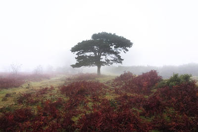 Baum Photograph - New Forest - England by Joana Kruse