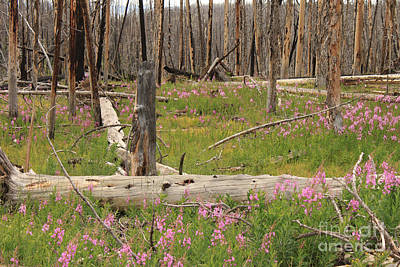 Tree Photograph - New Life by Carolyn Brown