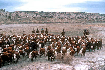 New Mexico Cattle Drive Print by Jerry McElroy
