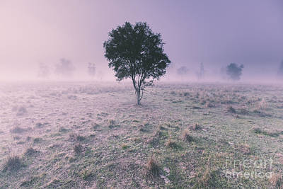 Winter Scenes Photograph - New South Wales Foggy Meadow by Jorgo Photography - Wall Art Gallery