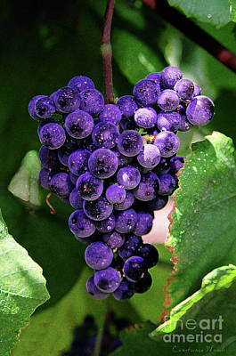 Purple Grapes Digital Art - New Wine by Constance Woods