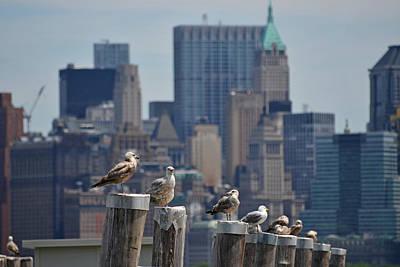 Liberty Island Digital Art - New York Seagulls by Toby McGuire