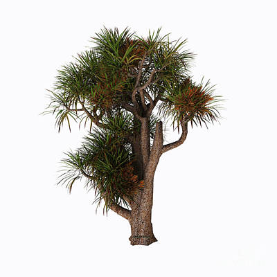 New Zealand Cabbage Tree Print by Corey Ford