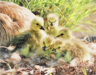 Newborn Canada Geese Goslings With Mother Goose In The Backgroun Print by Vizual Studio