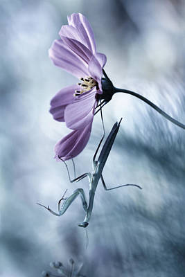 Mantis Photograph - Newtonian Physics by Fabien Bravin