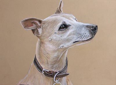 Niamh The Whippet Print by Mary Mayes