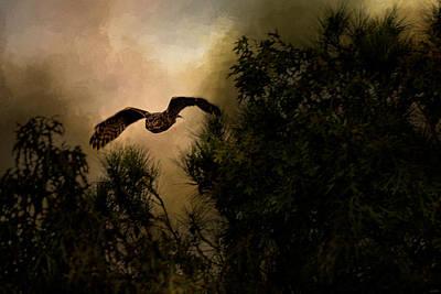 Owl In Flight Photograph - Night Of The Owl 1 by Jai Johnson