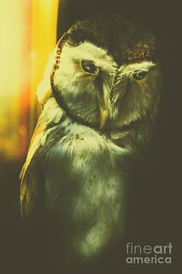 Night Owl Print by Jorgo Photography - Wall Art Gallery