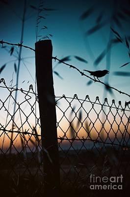 Enjoyment Photograph - Night Sparrow by Carlos Caetano