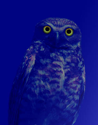 Birds Photograph - Night Stare by Shane Bechler