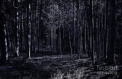 Woodlands Scene Photograph - Night Thicket  by Jorgo Photography - Wall Art Gallery