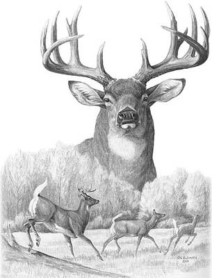 Deer Drawing - North American Nobility Whitetail Deer by Laurie McGinley