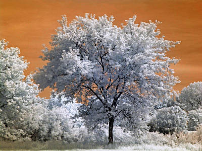 North St. Paul Tree 2 - Infrared Print by Scott Lacey
