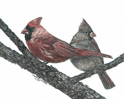 Drawing - Northern Cardinals by Stephany Elsworth