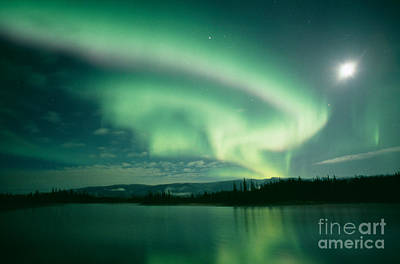 Northern Lights Print by David Nunuk