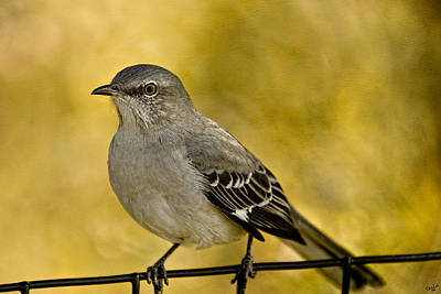 Mockingbird Digital Art - Northern Mockingbird by Chris Lord