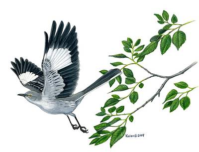 Mockingbird Drawing - Northern Mockingbird  by Kalen Malueg