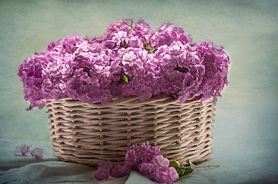 Phlox Photograph - Nostalgia And Phlox by Maggie Terlecki
