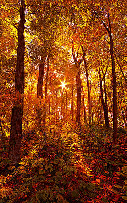 Not All Are Lost Print by Phil Koch
