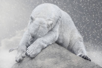 Bear Photograph - Not Dreaming Of White Christmas by Joachim G Pinkawa