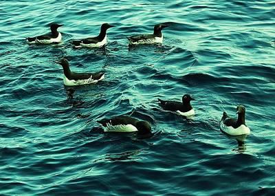 Dunk Island Photograph - Not Guilty by HweeYen Ong