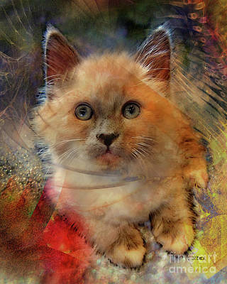 Kitten Digital Art - Notorious Rdk by John Robert Beck