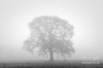 Balck Art Photograph - November Oak by Richard Thomas