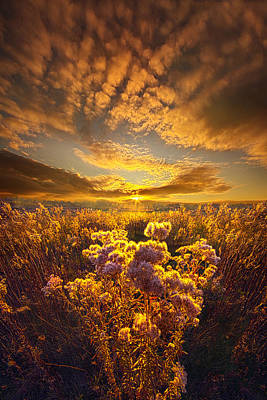 Heaven Photograph - Now Is My Story by Phil Koch