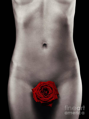 Suggestive Photograph - Nude Woman Body With A Red Rose by Maxim Images