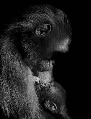 Baboon Photograph - Nurture by Paul Neville