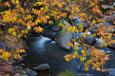 Oak Creek Canyon At Slide Rock In The Fall Print by Dave Dilli