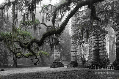 Fog Photograph - Oak Limb At Old Sheldon Church by Scott Hansen