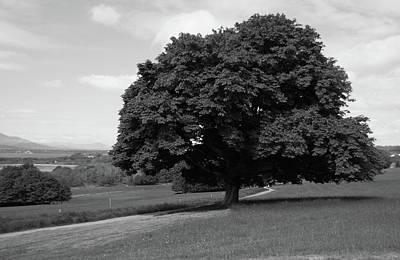 Oak Tree - Killarney National Park Print by Aidan Moran