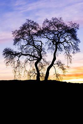 Oak Tree Silhouette At Dawn Print by Priya Ghose